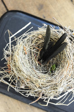 Swallow Bird Nest Used As An Object Of Interior Decoration