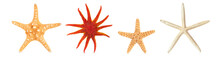 Different Starfishes In A Row.
