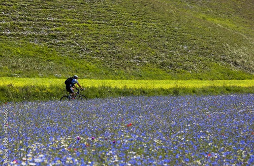 Mountain biker running in the flowering fields and lentils cultivation of Pian Grande, Castelluccio di Norcia, Italy