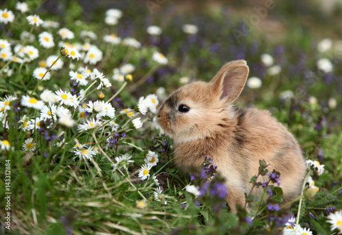 Slika na platnu Cute bunny rabbit in colorful meadow