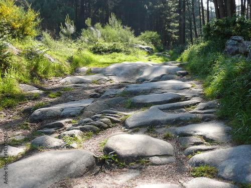 Foto op Canvas Bos rivier Steiniger Weg durch Wald