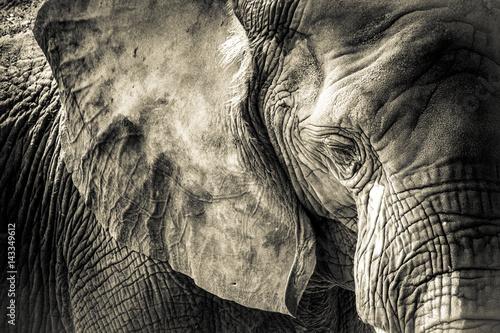 Photo sur Toile Elephant Elephant Texture
