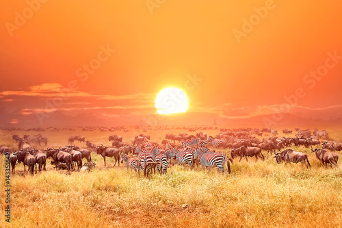 Fotobehang Afrika Zebras and antelopes in africa national park. Sunset.