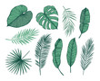 Hand drawn vector illustration - Palm leaves (monstera, areca palm, fan palm, banana leaves). Tropical design elements. Perfect for prints, posters, invitations etc