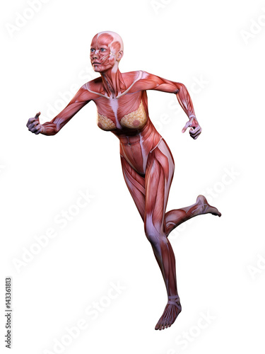 Muscle woman anatomy in motion 3D Illustration - Buy this stock ...