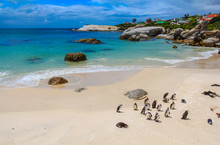 Penguins In A Beautiful Beach ...