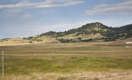 Fotobehang Heuvel Hills and pine trees in the Black Hills of South Dakota