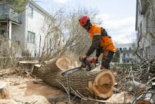 Sweden, Sodermanland, Arborist Cutting Log