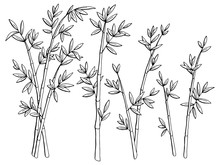 Bamboo Plant Graphic Black White Isolated Sketch Illustration Vector