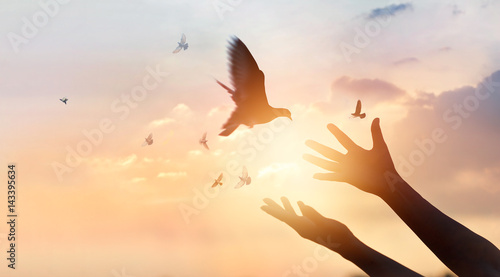 Woman praying and free the birds enjoying nature on sunset background, hope concept