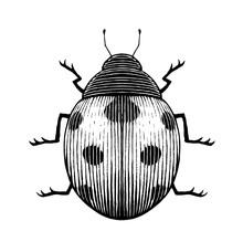 Vectorized Ink Sketch Of A Ladybug