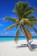 Beach sunbeds under palm tree on the tropical secluded beach in sunny day, Maldives