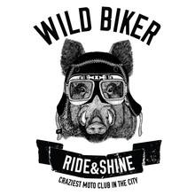 Vintage Images Of Hog For T-shirt Design For Motorcycle, Bike, Motorbike, Scooter Club