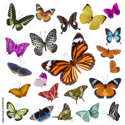 Fotografie, Obraz  Set of butterflies isolated on white background