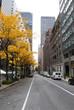 New York City street, fall season