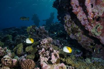 Naklejka na ściany i meble Reef scenics, inner lagoon, Kingman Reef.