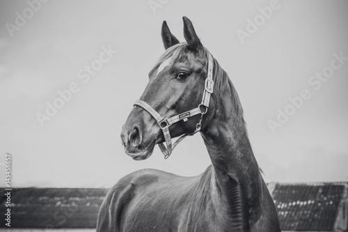 Fototapety, obrazy: Horse portrait