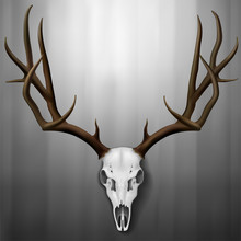 Realistic Elk Skull And Antlers Hanging On Wall, Vector Illustration