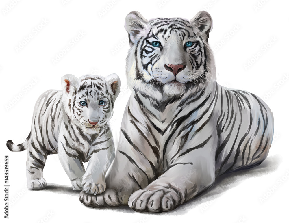 Fototapeta White tigers watercolor painting