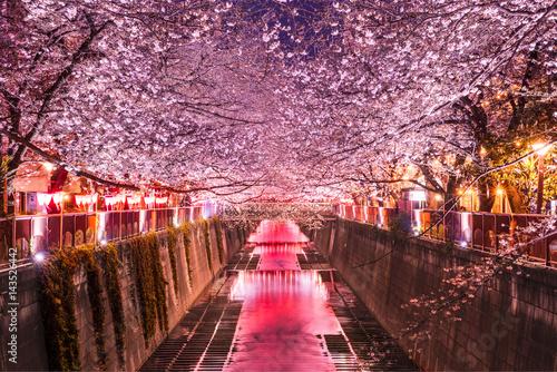 Foto op Aluminium Kersenbloesem 目黒川の夜景