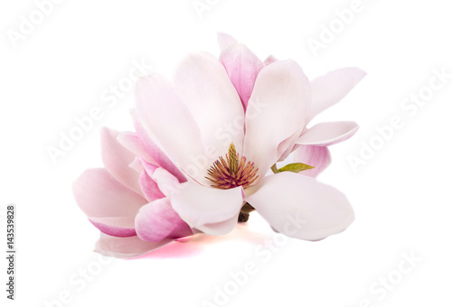 Stickers pour porte Magnolia The pink magnolia flowers
