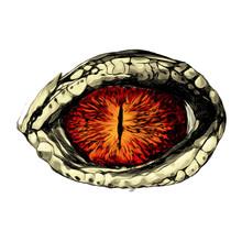 Eye Of A Crocodile Or Reptile ...