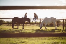 Friends Sitting On Wooden Fence While Horse Grazing In Farm