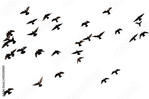 Photo  Free. Flight of birds in the wild. Silhouette.  Freedom