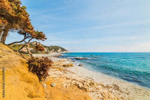 Photo  Pine tree in Capo Carbonara