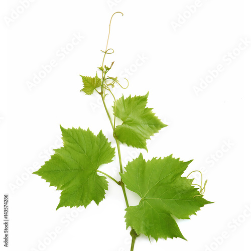 Fotografía  Feuilles de vigne