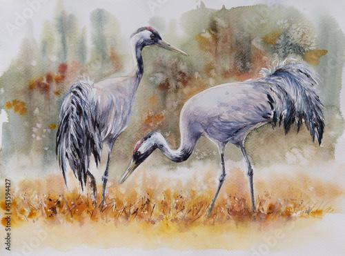 para-zurawi-ptaki-na-lace-obraz-stworzony-akwarelami