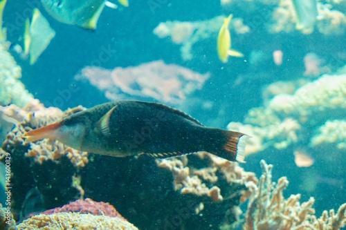 In de dag Koraalriffen ein Korallenriff
