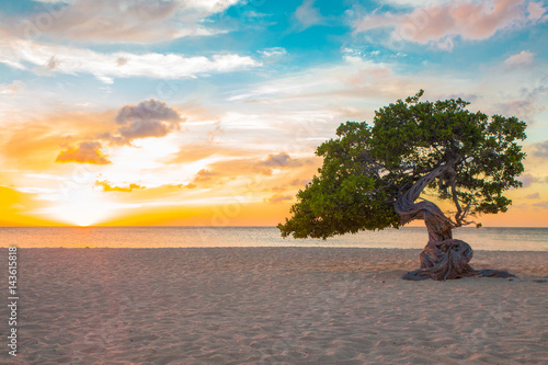 Poster Trees Idyllic view of tropical Aruba beach with Divi Divi tree at sunset