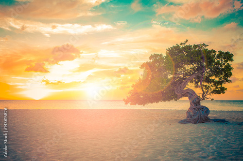 Photo Aruba beach sunset with Divi Divi Tree