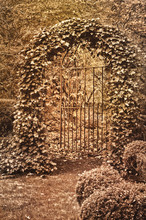 Wrought Iron Gate Covered In Ivy With Sepia Tone Effect/English Garden With Ornate Wrought Iron Gate Covered With Ivy In Sepia Tone Effect