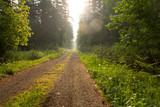 Droga leśna o poranku