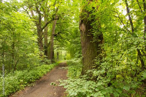 Foto op Canvas Weg in bos Zielona droga leśna