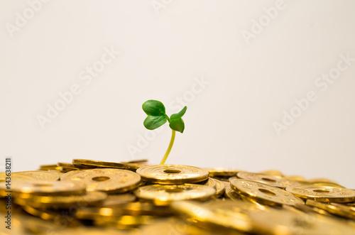Fotografía  お金を産む植物。
