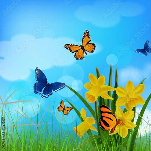 Tuinposter Vlinders spring backgrounds with butterfly, flower, grass and clouds sky