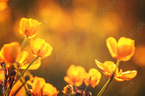 field of spring flowers Slika na platnu