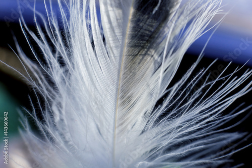 Türaufkleber Makrofotografie Feather birds close-up. Macro photography.