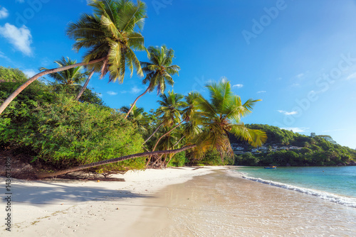 Deurstickers Tropical strand Tropical exotic sandy beach with palms and turquoise sea.