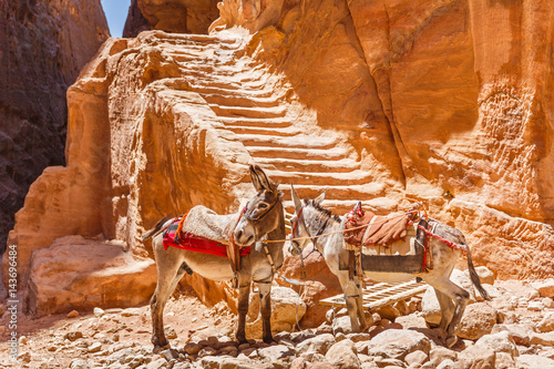 Two donkeys in Petra next to the ancient steps carved from the rocks