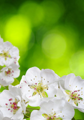 NaklejkaSpring blossom with soft blur background