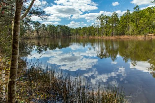 Fotografie, Obraz  Pond on Newtown Road