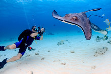 SCUBA Diver And Stingray Underwater