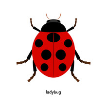 Ladybug Is An Insect Of An Unusual Bright Color Using Respect And Sympathetic By People
