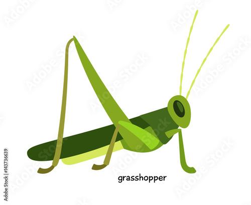 Stampa su Tela Green grasshopper  - arthropod, an expert in long jump