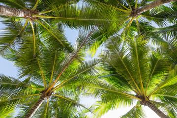 Panel Szklany Podświetlane Liście Coconut palm tree.
