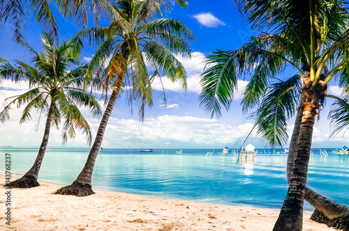 Poster Tropical plage View on turquoise palm beach by Phu quoc island in Vietnam